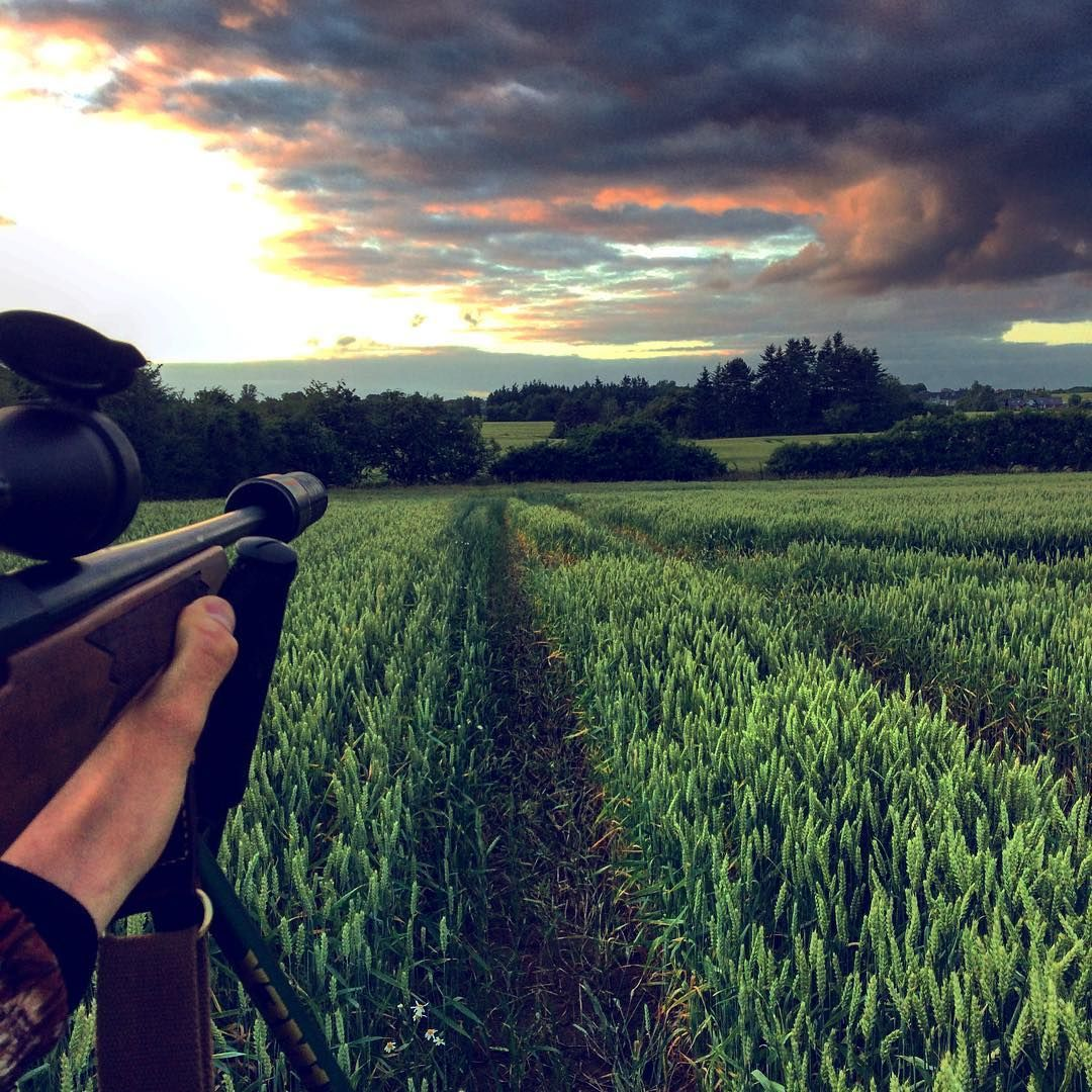 Hunting roebuck. #hunterslife #jagtidanmark #hunt #hunting #huntingroebuck #bukkejagt #jagt #nordiskjakt #jakt #jagd #tikka #SL #leupoldoptics #danskjagt http://misstagram.com/ipost/1550986035659619260/?code=BWGNZT7FTu8