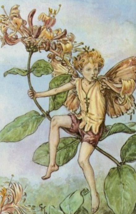 Honeysuckle Fairy