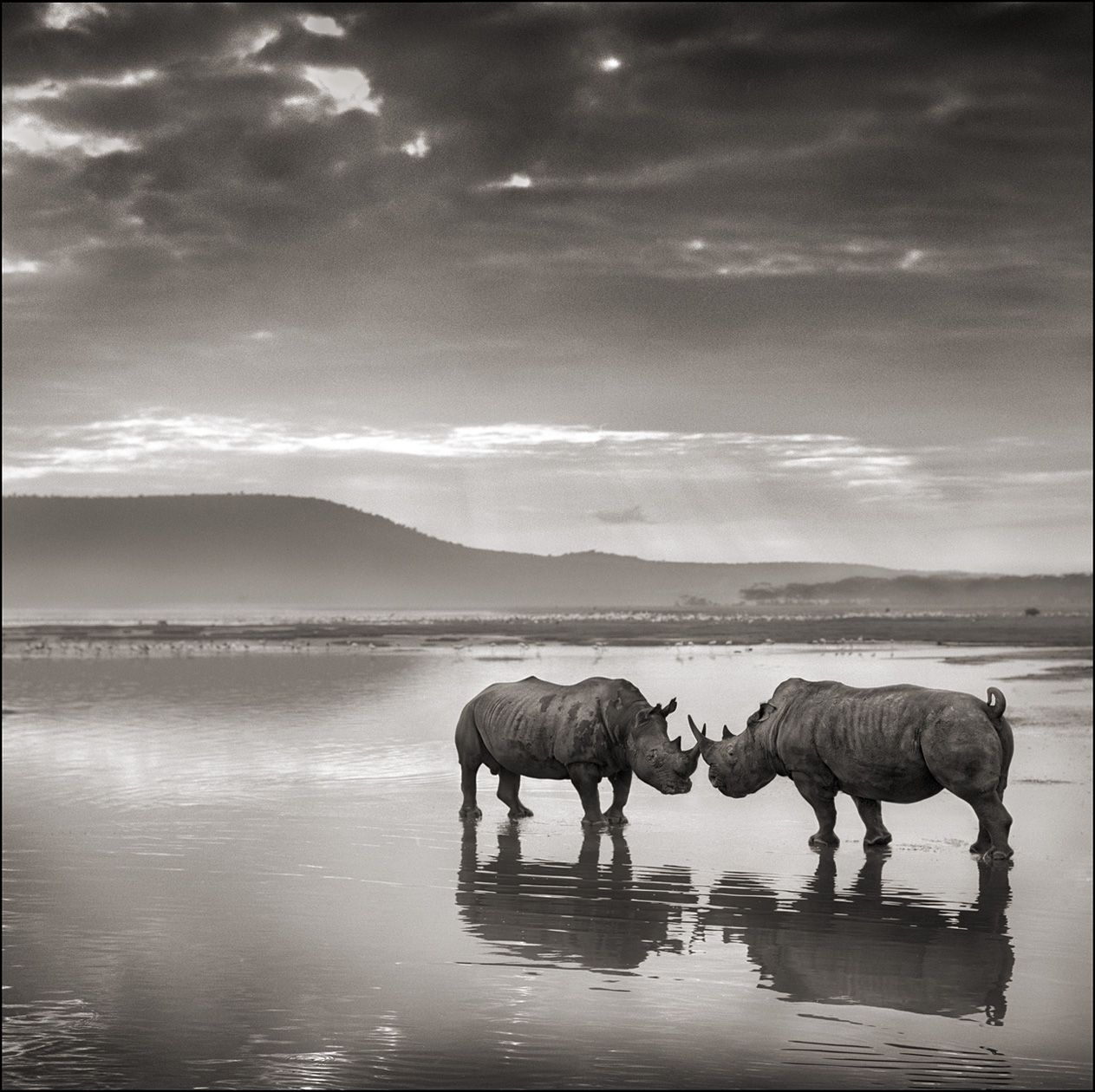 """Rhinos in Lake"" - Lake Nakuru 2007 - ©Nick Brandt"