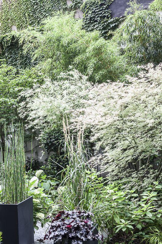 une jardin d\'ombre : jardin c | Gardens | Pinterest | Gardens