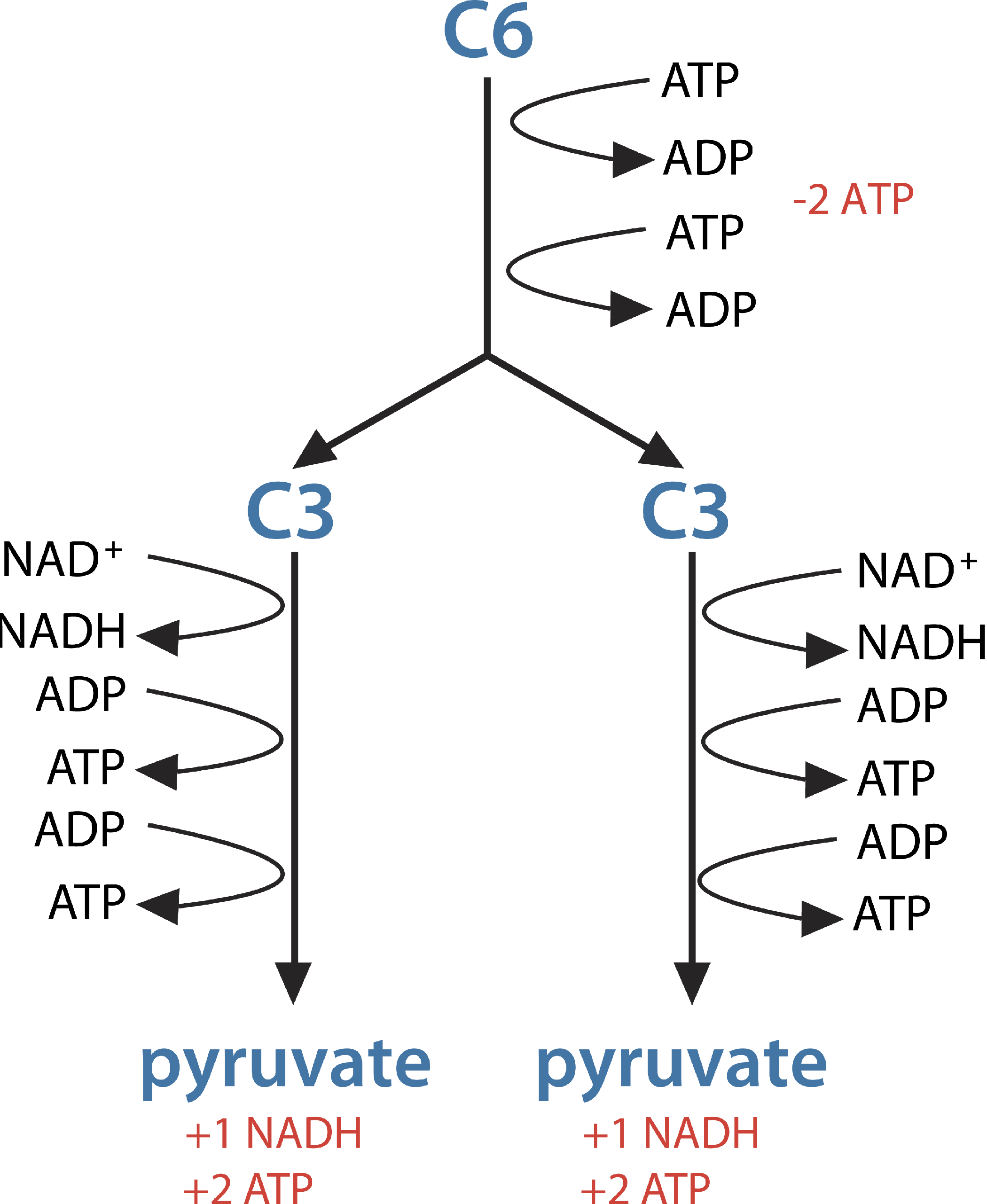 C 8 Photosynthesis and Respiration DFJHS Science