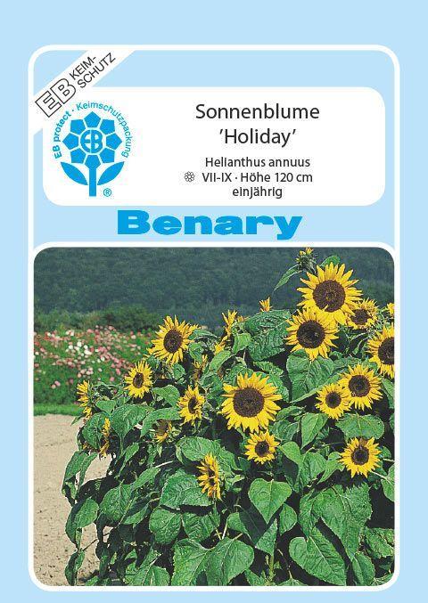 Sonnenblumen Zwerg Sonnenblume Helianthus Pacino Gold Höhe 30-40 cm Samen
