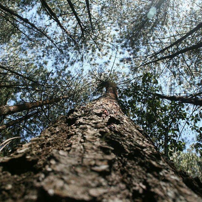 5 Imperdibles Naturales en Mérida: 1. Paseo Ecológico: En la vía hacia la Culata hay un sector llamado Los Pinos es un bosque inmenso de pinos caribe. Lo impresionante de este paseo es que el piso está cubierto de las hojas de estos pinos que son como palitos y al secarse toman un color marrón rojizo.  2. Teleférico de Mérida Mukumbari: la subida al teleférico de Mérida el más alto y el segundo más largo del mundo. Una vista casi panorámica de toda Mérida ubicada en la zona andina de…