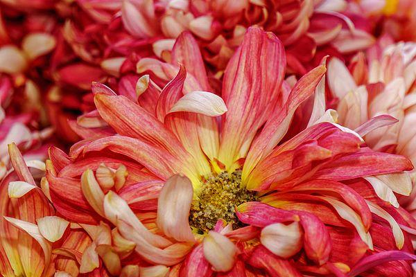 Charisma.  Wintergardens, Auckland Domain. Auckland, New Zealand.  View my portfoio at www.zarirmadon.com