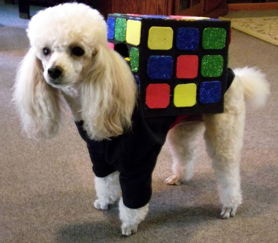Rubik S Cube Poodle Costume Dog Costumes Dog Costume Your Dog