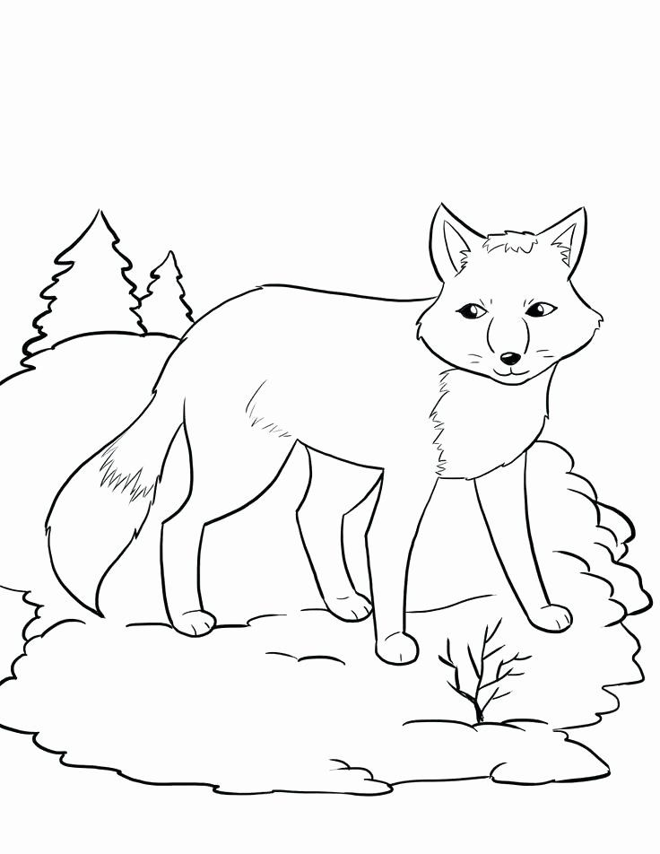 Arctic Fox Coloring Page Awesome The Best Free Arctic Coloring Page Images Download From 545 In 2020 Fox Coloring Page Animal Coloring Pages Coloring Pages Winter