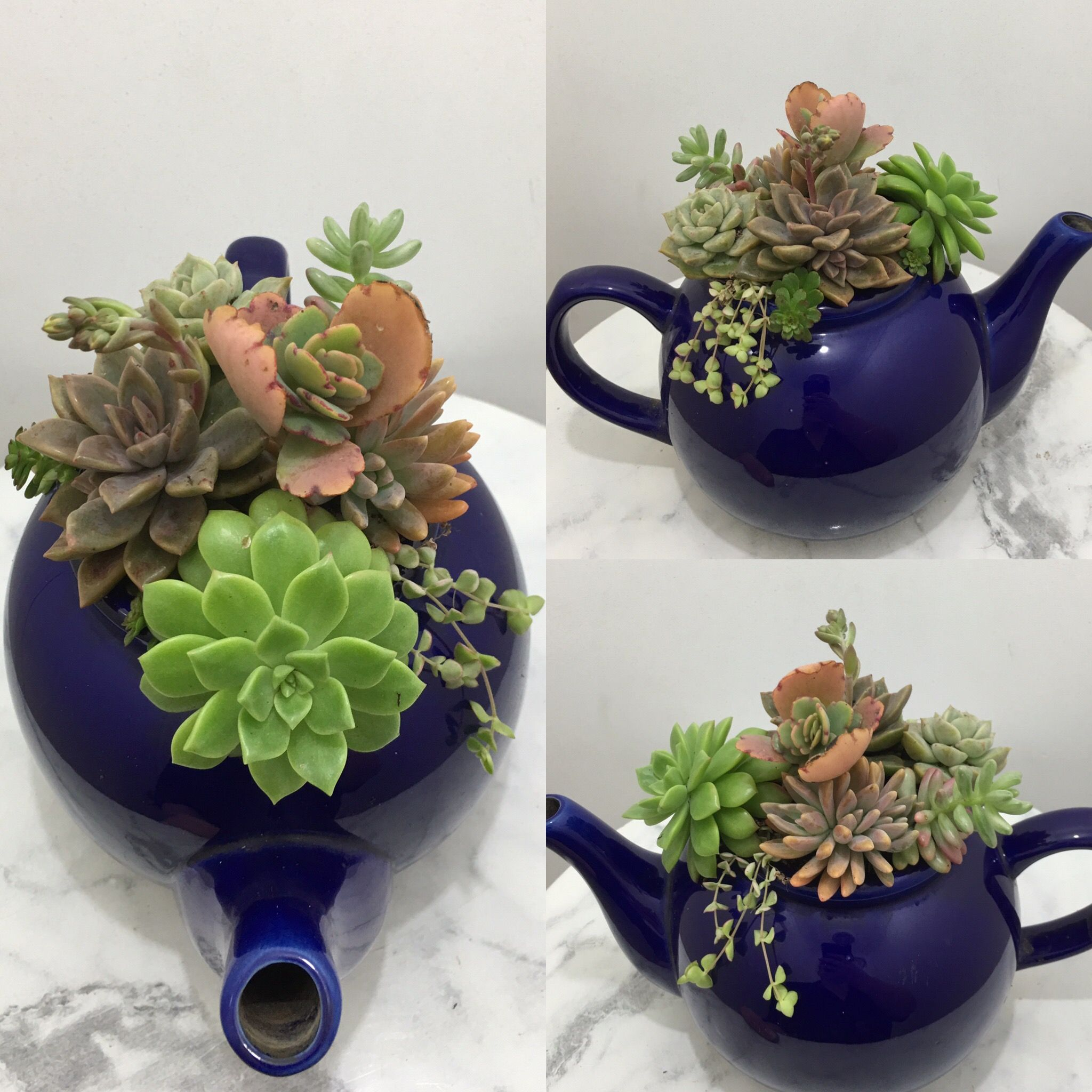 Succulent Teapot By Turtle And Co