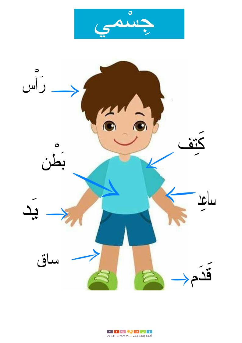 My Body Boy Chart Pdf جسمي Alif2yaa Arabic Kids Alphabet Preschool Arabic Language [ 1123 x 794 Pixel ]