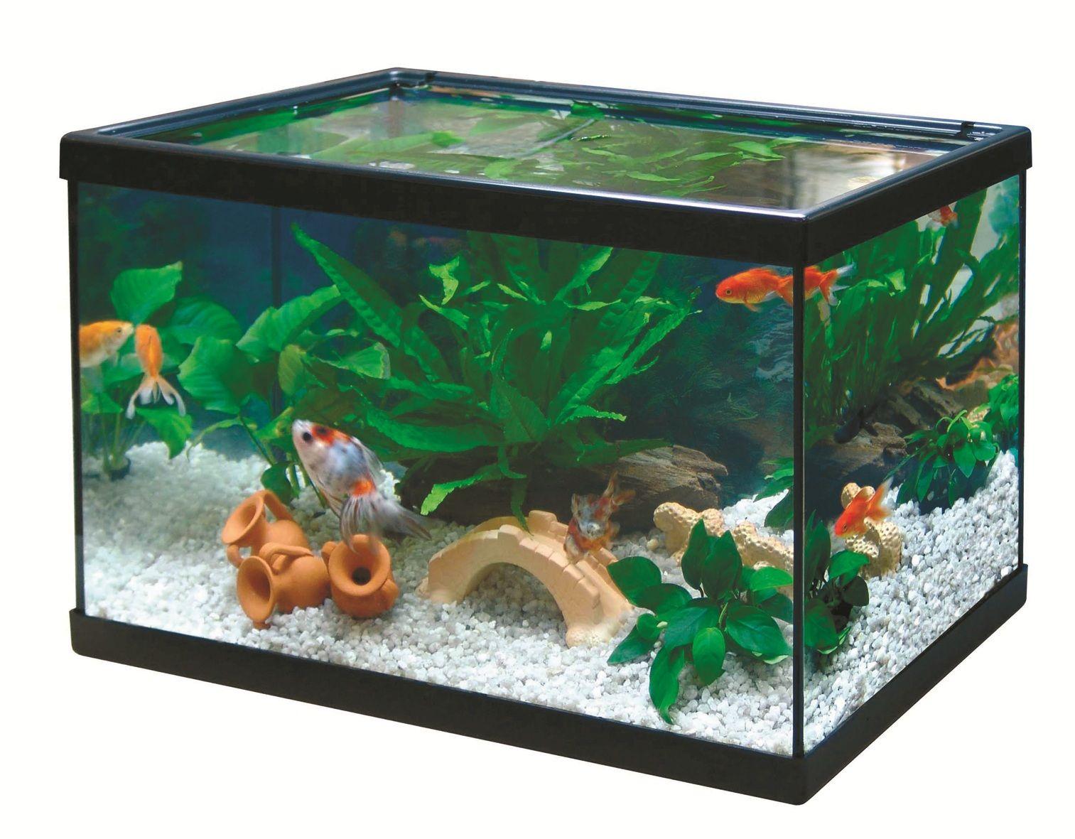 C mo tener y cuidar una pecera pecera fish peces - Peceras de diseno ...