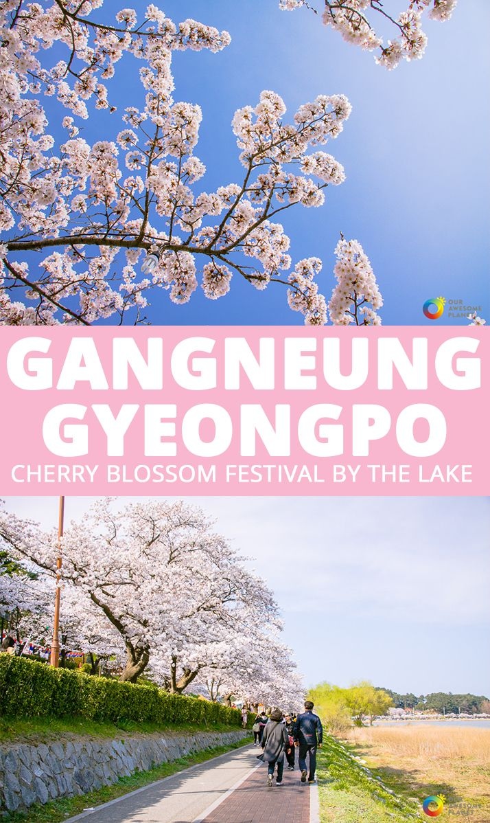 Gangneung Gyeongpo Cherry Blossom Festival By The Lake Awesome