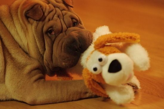 Gaho Gd S Dog Dogs Cute Animals Cute Dogs