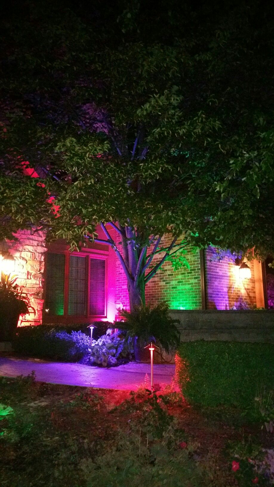 Outdoor Lighting Zdc Luxor Color Changing System Outdoorlighting Landscapelighting Led Lightingconcepts Pathlights Spotlights Pohon Lampu
