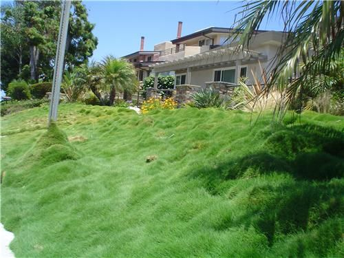 This no mow lawn of ornamental grasses is a low care for Hillside landscaping plants