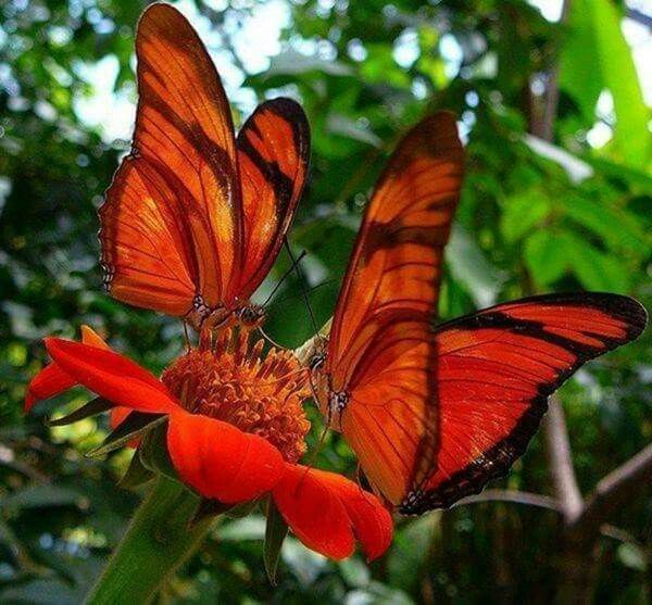 Na flor, borboletas