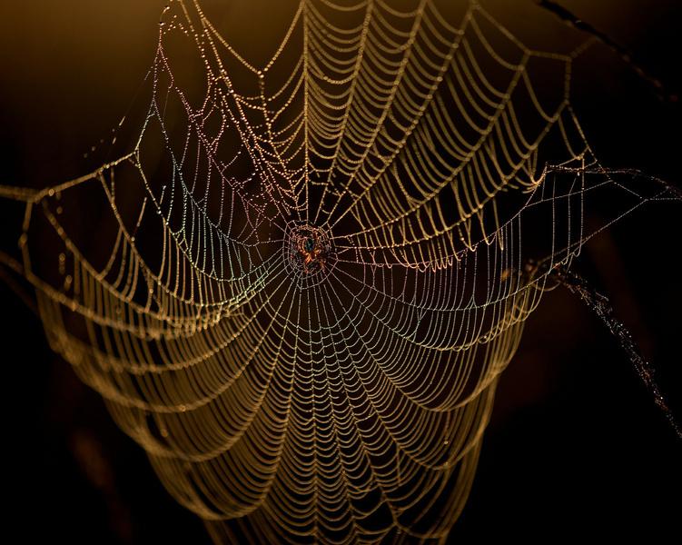 Kunstwerk Spinnenweb Van Erik Veldkamp