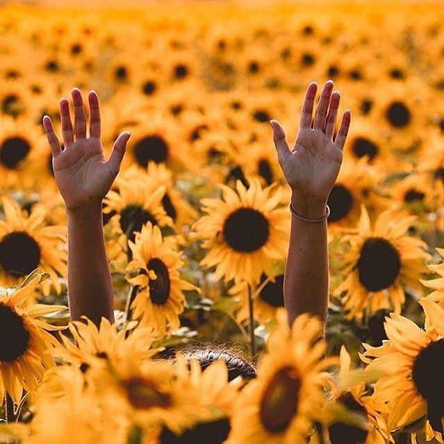 Inmossmadrid Thanks For This Pic To Hippiespirits Girasoles Sunflower