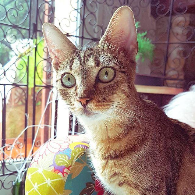 Pour vous souhaiter une bonne semaine j'ai pensé que la petite Yumi serait plus indiquée que moi qui continue à tousser cracher et j'en passe... J'arrête là promis niveau détails et sinon pour toi ça se présente bien ? . . . . . . . #catlover #catphotography #lovecats #catsofinstagram #catpic #tropmignonne #adorable #ilovemycat #catsoftheworld #pet #cat #catoftheday #pets #cats #petsagram #cat_of_instagram #instacat #catlovers #animals #angelique