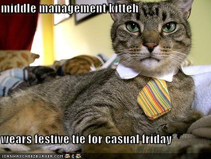 Happy Friday! Cats, Cat fashion, Cute cats