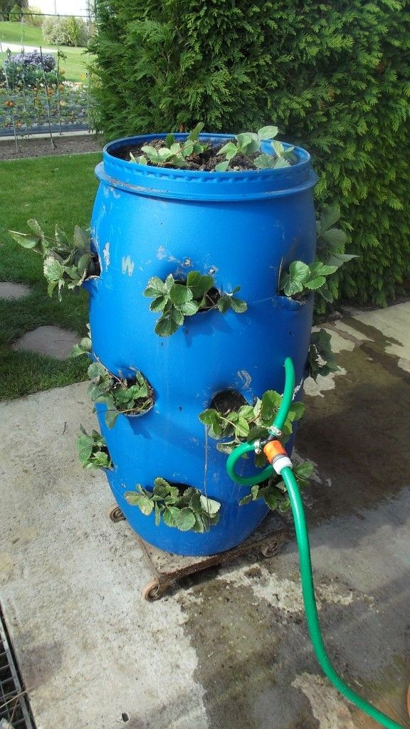 Comment arroser une tour a fraisiers des fraises en tube, fraises - recuperation eau de pluie maison