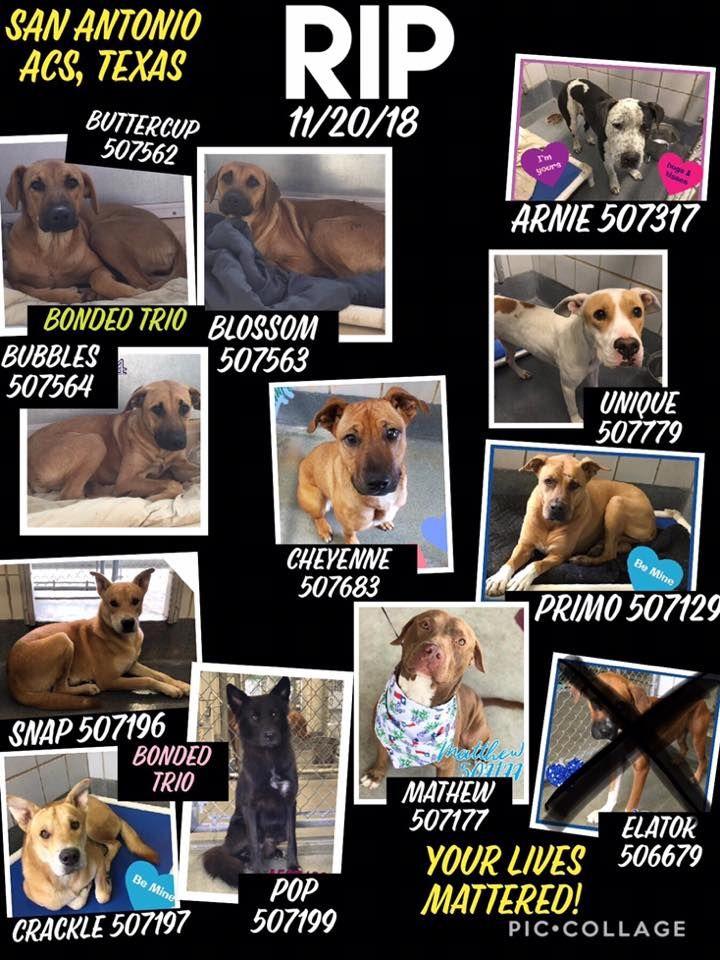 15 dogs released to DIE 11 KILLED by sanantoniotexas
