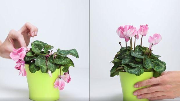 Cómo hacer un fertilizante casero que cuide tus plantas