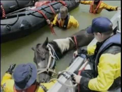 Texas Task Force 1 rescuing a horse stranded by Texas floods