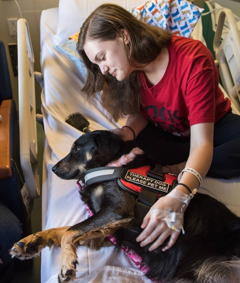 Annie, a pet therapy dog at Tampa General Hospital, warms the hearts of TGH patients and their loved ones. From calming patients before a procedure to visiting families in the waiting room, pet therapy animals spread smiles throughout TGH.