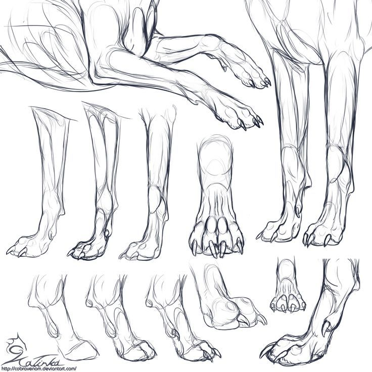 Foot Leg & Paw & Claw * 15 | Wolf desings | Pinterest | Legs ...