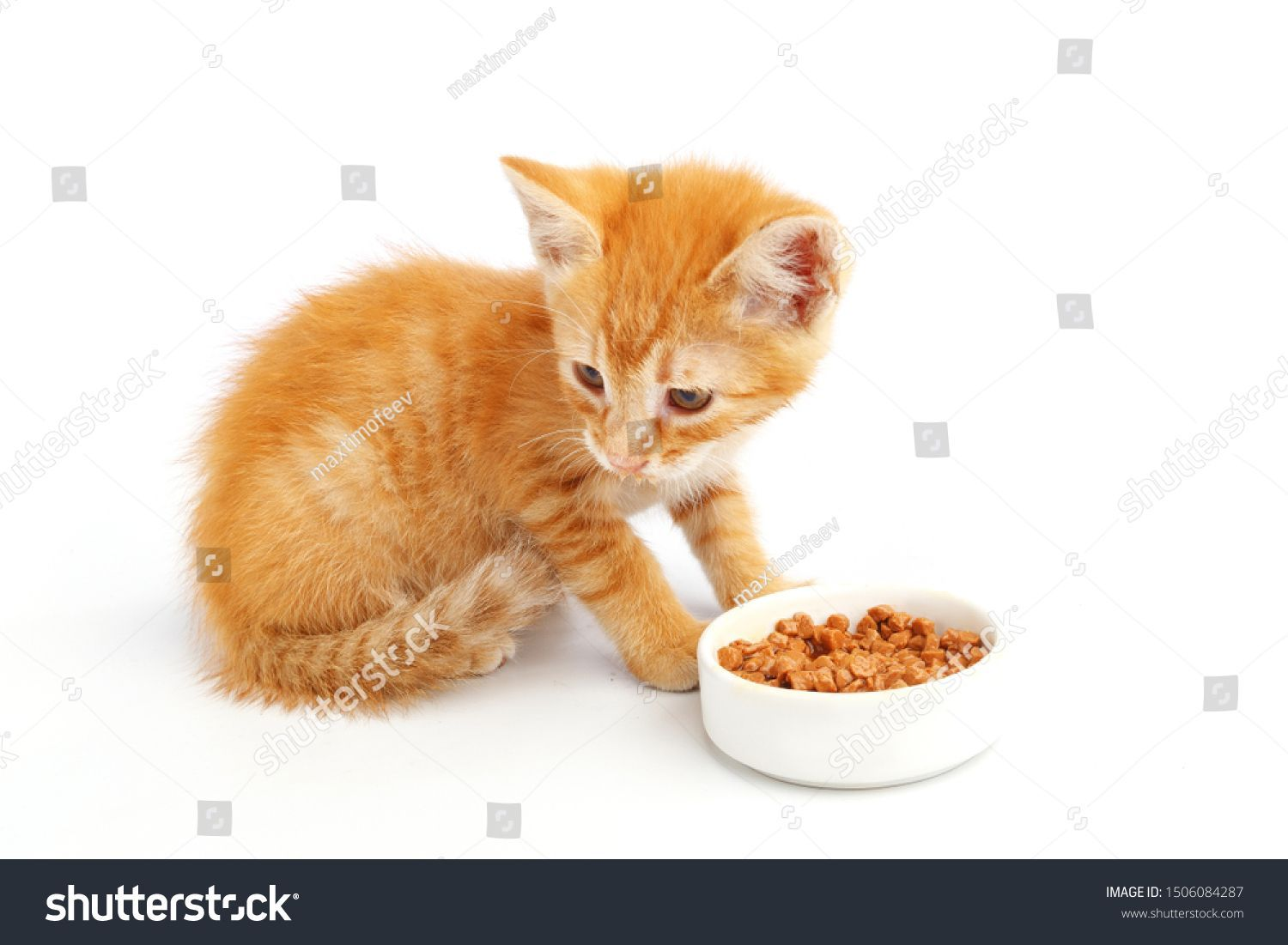 Little ginger kitten eats cat food from a bowl. #Sponsored , #AD, #eats#kitten#ginger#bowl #gingerkitten Little ginger kitten eats cat food from a bowl. #Sponsored , #AD, #eats#kitten#ginger#bowl #gingerkitten