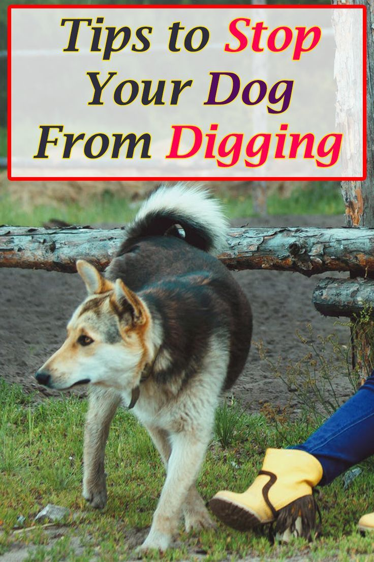 Does your dog dig holes in your yard dig out under the