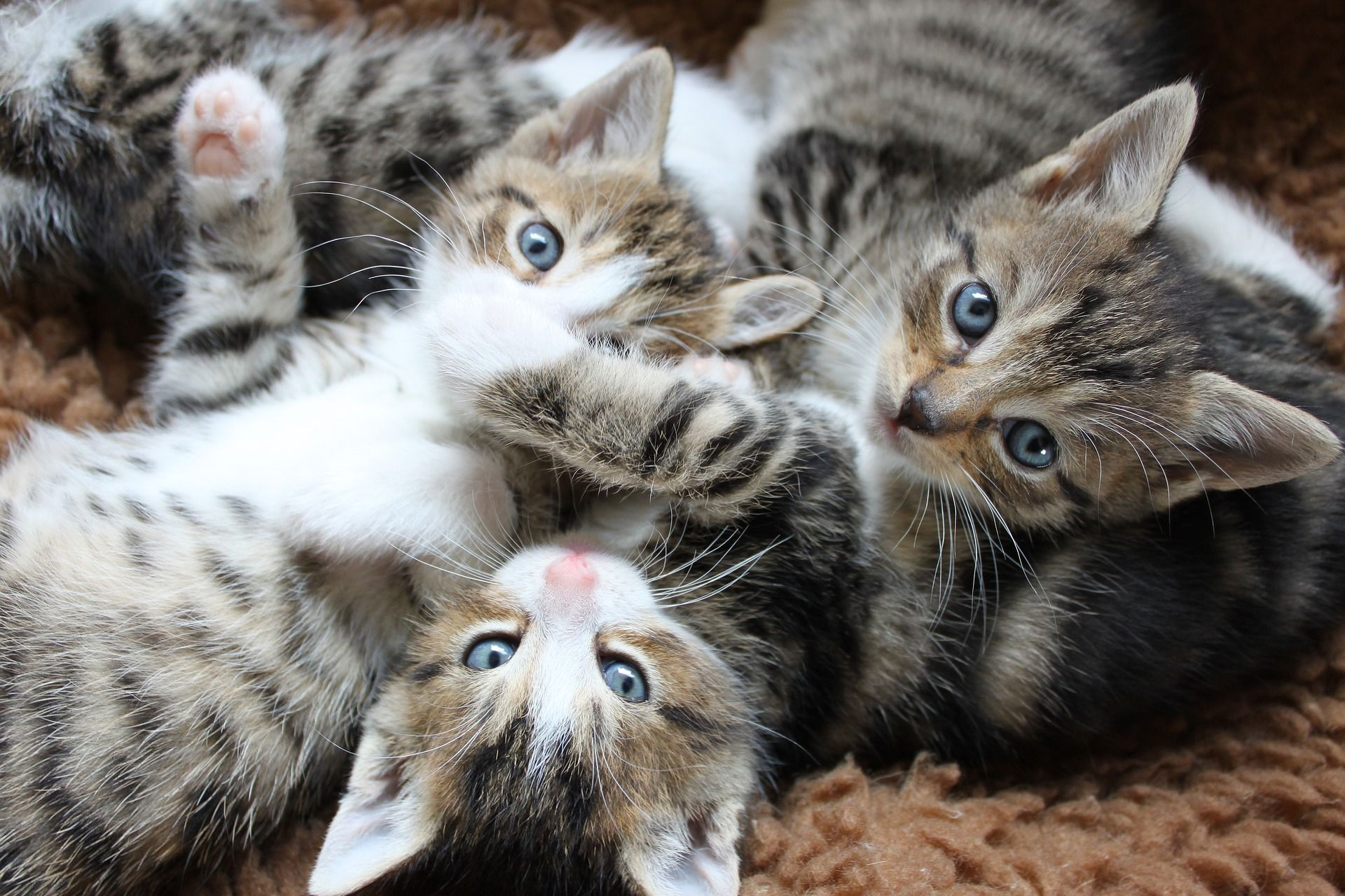 Katzenbabys erziehen die besten Tipps / Allgemeine Infos