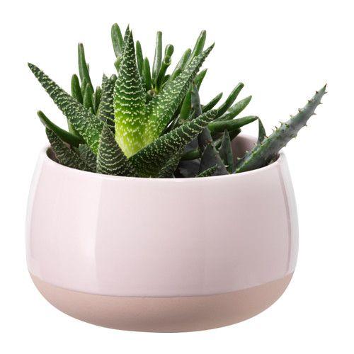 übertöpfe Für Zimmerpflanzen succulent pflanze mit übertopf rosa übertöpfe pflanze und
