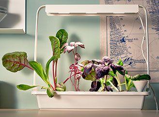 Kweekbak met led-verlichting - binnen tuinieren | Pinterest ...