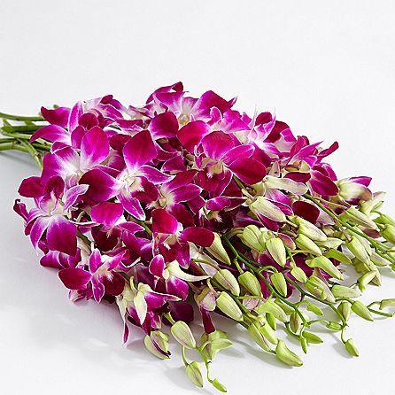 Offerta Orchidee Dendrobium, Scopri Online come ricevere i fiori freschi a casa! #fiori #nature #fiorionline #flowers #garden #autunno