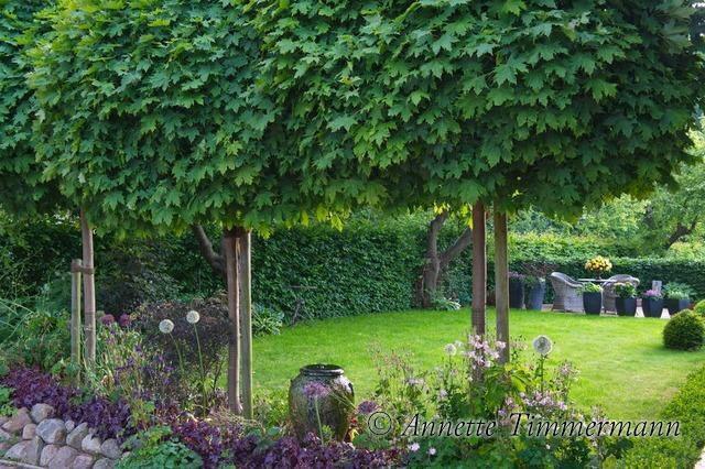 Kugelbäume, Sichtschutz, Schatten Sichtschutz garten