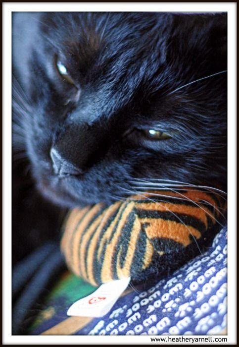 Salem sleeping on his spider.