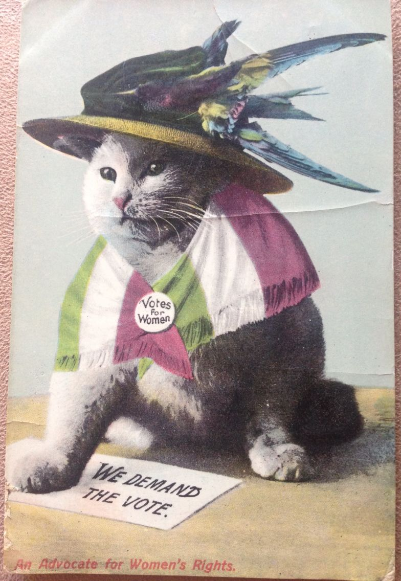Image result for suffrage cat postcards