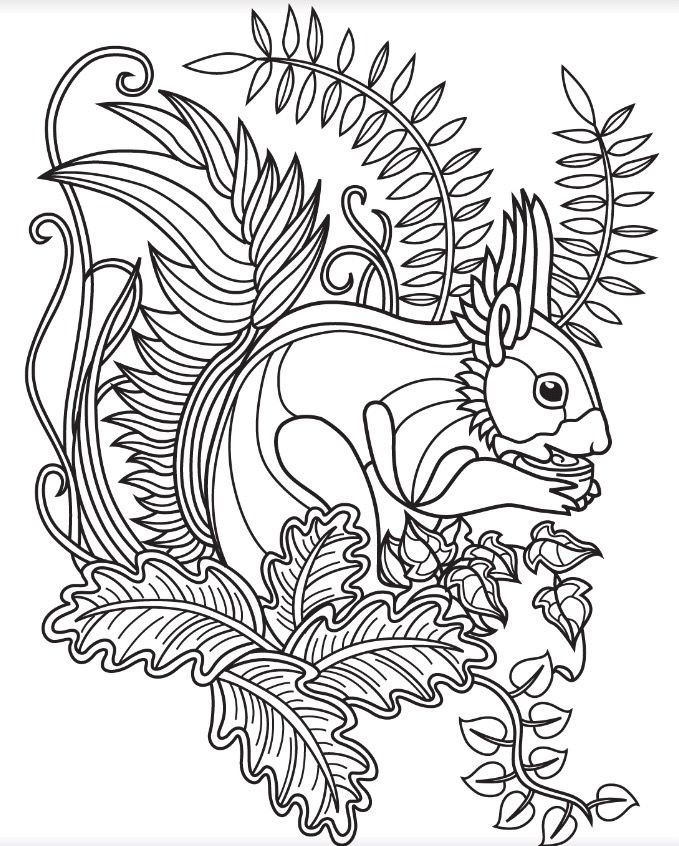 Forest coloring page Colorish