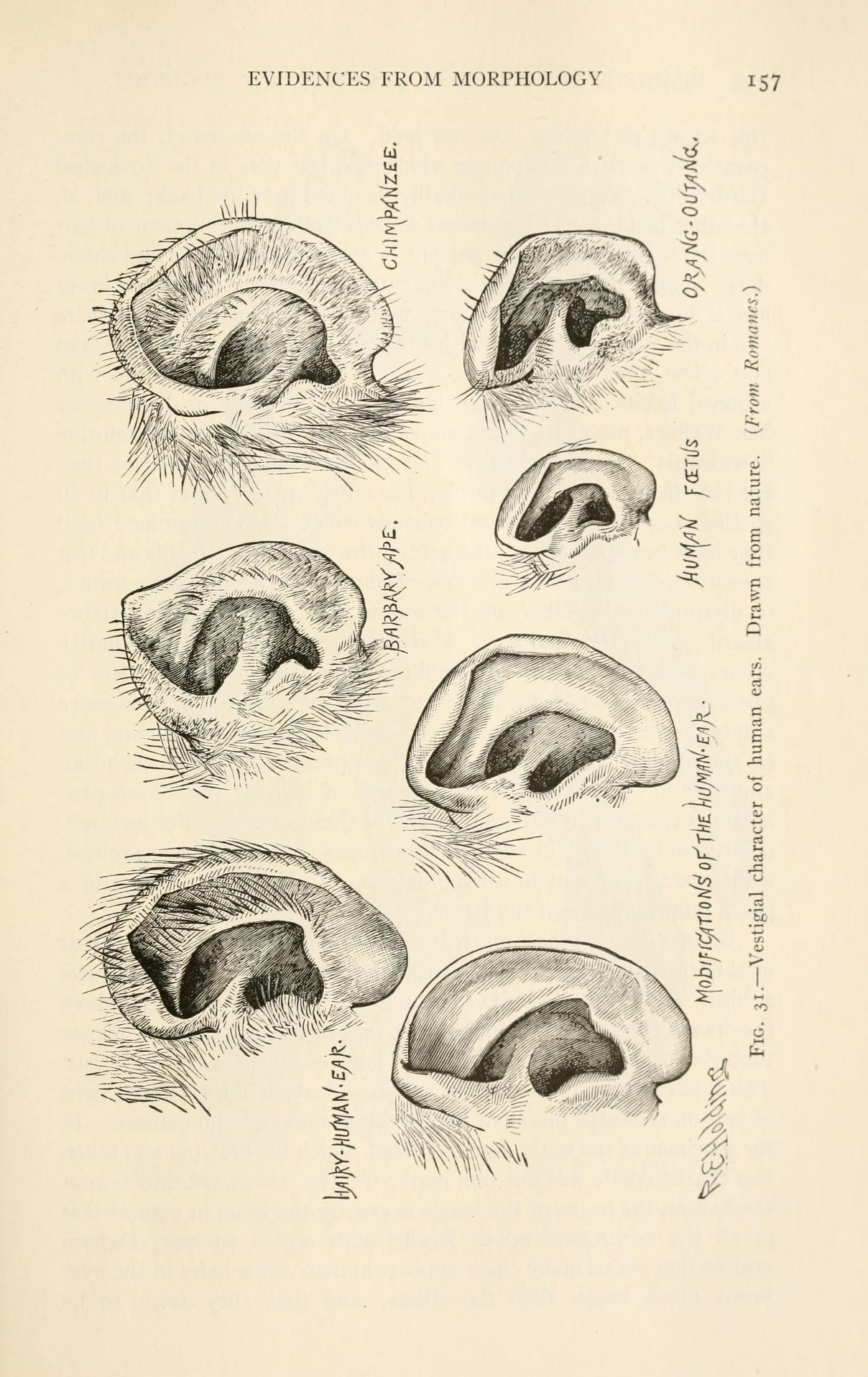 Readings in evolution, genetics, and eugenics | comparative Anatomy ...
