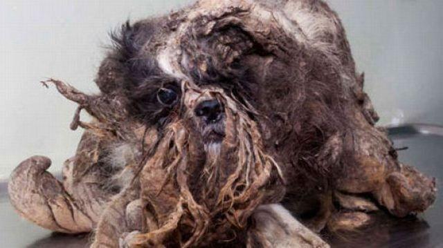 Kleiner Straßenhund wird entfilzt / Schockierendes aus dem Netz / Lustige Videos und Bilder - Unlustig.com