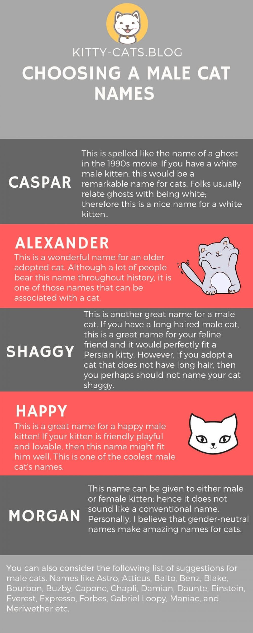 Https Www Kitty Cats Blog New Who Likes It Wow Cats Cat Happycats Catgram Catsofworld Catofday Dailycat Sillycat Cat Names Cats And Cucumbers Cats