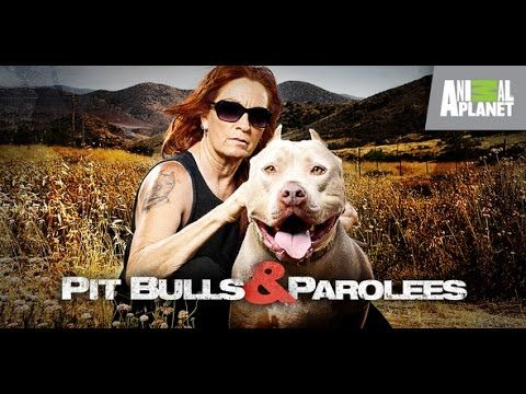 Pit Bulls And Parolees Pit Bulls Parolees Pitbulls Animal Planet