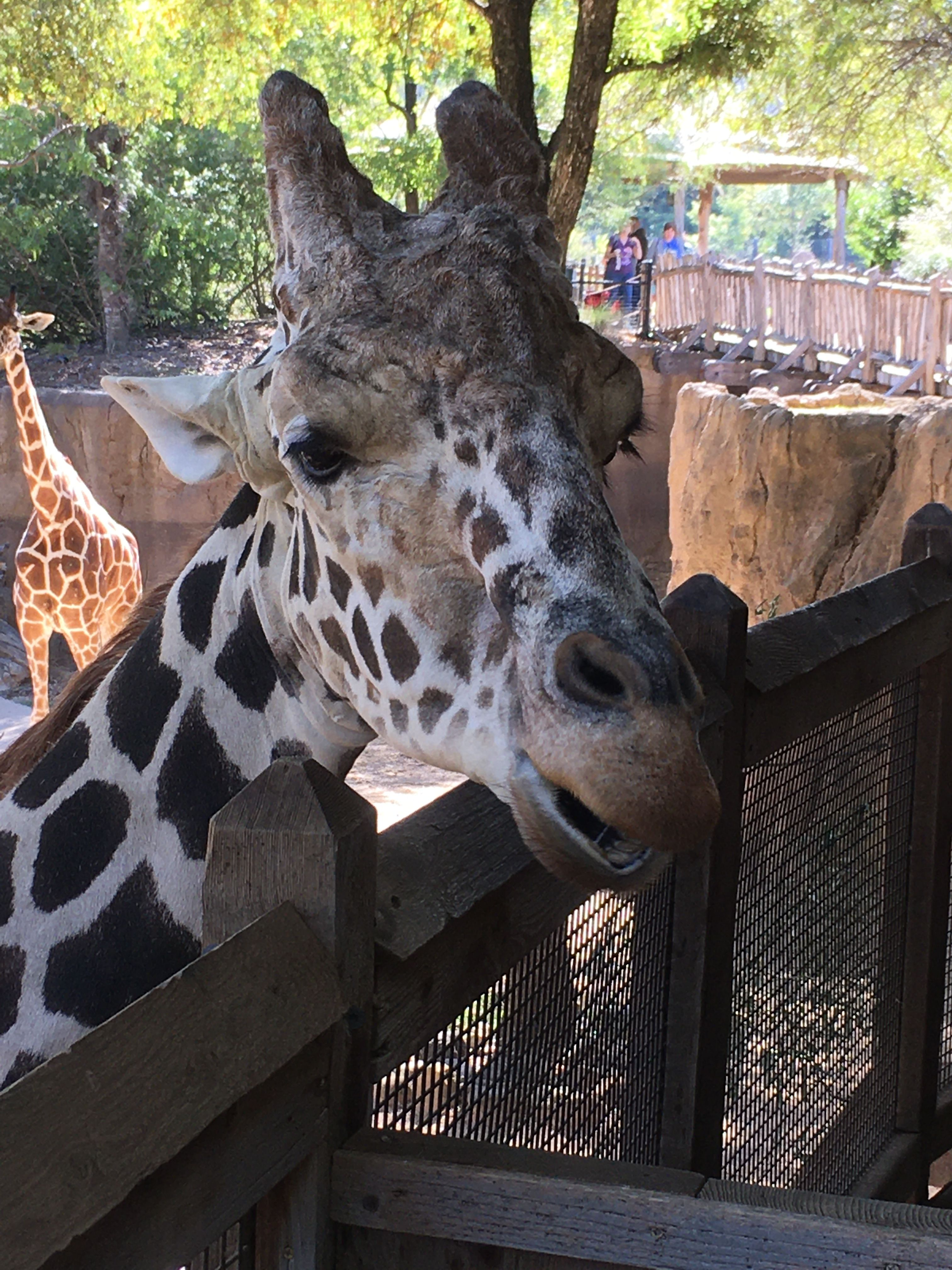 Pin By Harv Mitchell On Harv S Friends With Images Dallas Zoo Zoo Animals