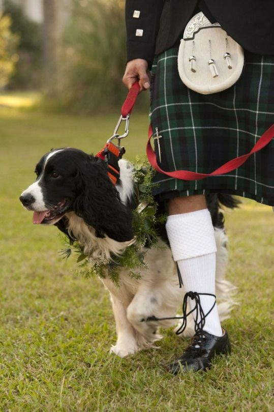 For The Love Of Santa Lucia Springer Spaniel Men In Kilts English Springer Spaniel