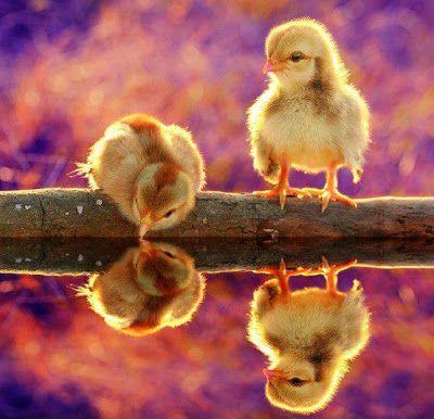 Imágenes Bonitas Animales - Vol.2 (20 Fotos)