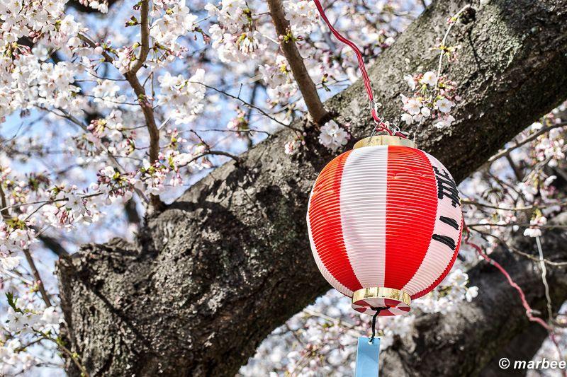 桜が咲く。それは日本人にとって祭りと同じ