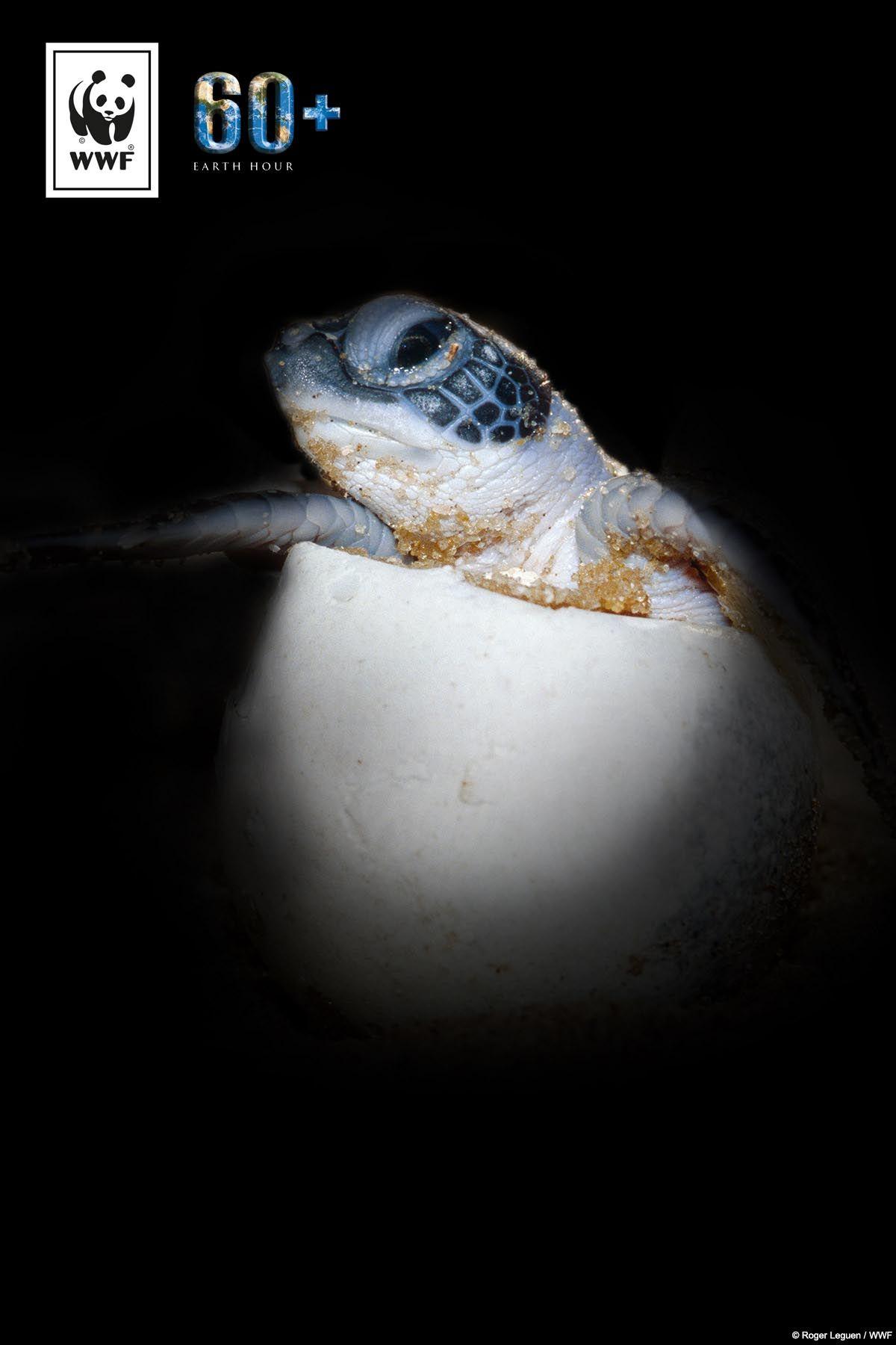 Wenn wir weitermachen wie bisher, könnte es bald nur noch weibliche Grüne Meeresschildkröten geben könnte? Eine von sechs Tierarten ist durch den Klimawandel vom Aussterben bedroht. Macht mit bei der #EarthHour und setzt ein Zeichen für mehr Klimaschutz und die Arten: www.wwf.de/earthhour