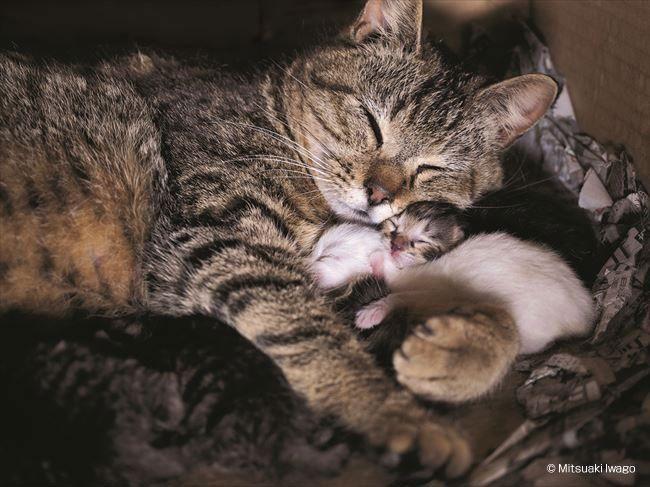 産まれたばかり。コトラ、いい母親です