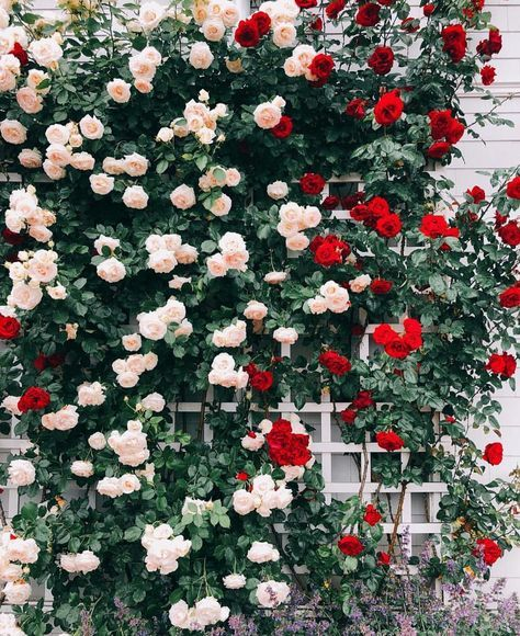 Pin by Lenalena on ایدع برای سالن in 2020 Flowers