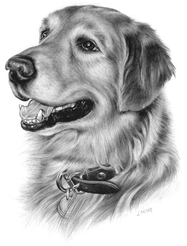 Pin By Drawing 101 On Animals Dog Portrait Drawing Dog Pencil